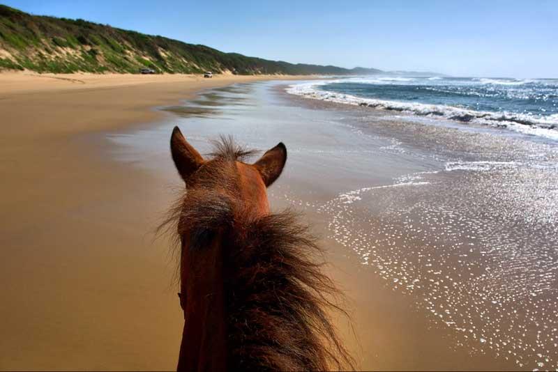 horseback-riding-rincon-pr1